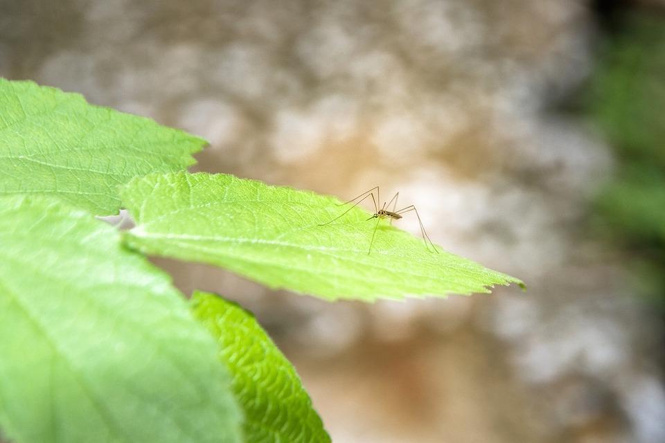 cacciar via zanzare