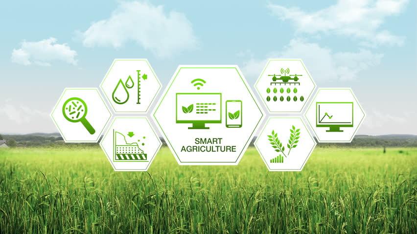 logistica del food trasformazione digitale