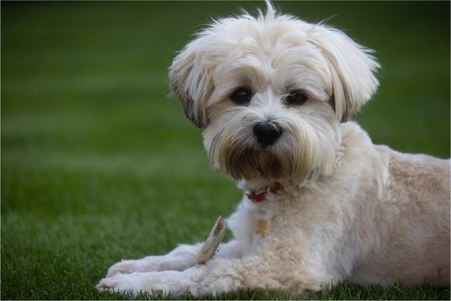 osteoartrite nel cane